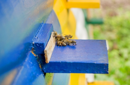 Honey bee hives photo