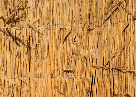 fence of dry cane photo