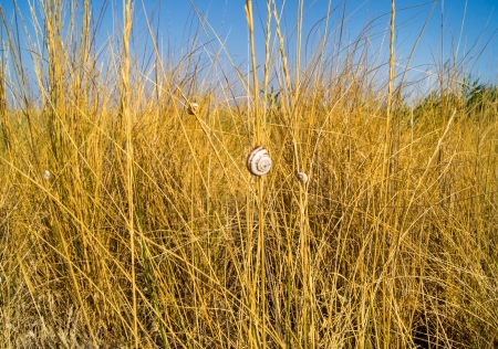 Dry grass and sky photo