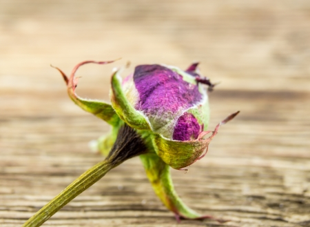 A dried rose on wooden background photo
