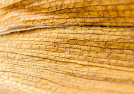 blotched: diseased leaf orchid Stock Photo