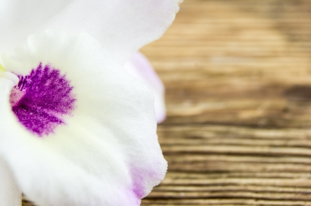 orchid flowers on wooden background photo
