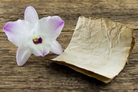 orchid flower on wooden background with space for inscriptions photo