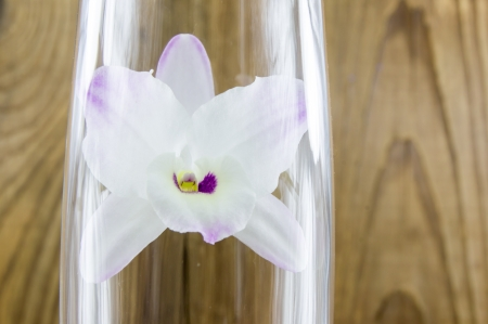 Orchid groceries on wooden background photo
