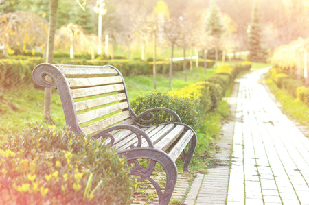 bench in the autumn park for your design photo