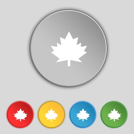 Maple leaf icon. Set colourful buttons. Vector illustration Vector