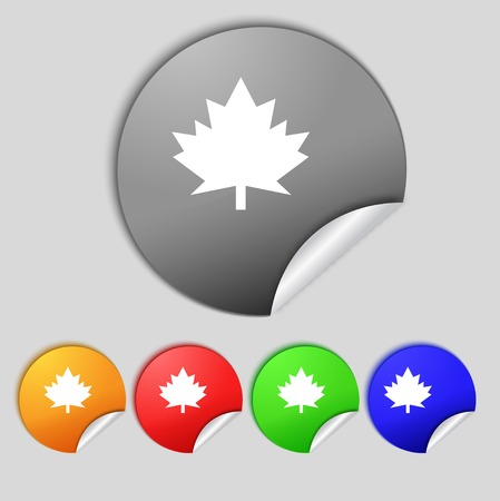 Maple leaf icon. Set colorful buttons.  illustration illustration