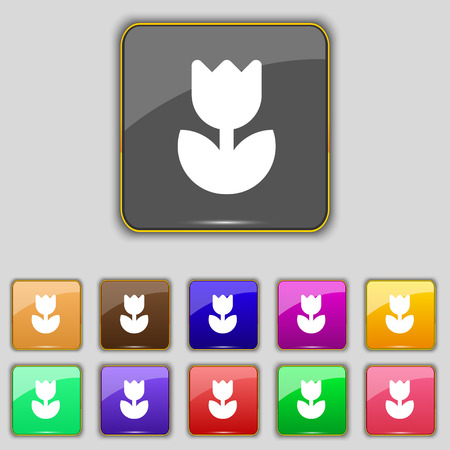 eleven: Flower, rose icon sign. Set with eleven colored buttons for your site. Vector illustration Illustration
