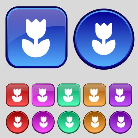 flower rose: Flower, rose icon sign. A set of twelve vintage buttons for your design. Vector illustration