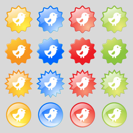 dominant: chicken, Bird icon sign. Set from fourteen multi-colored glass buttons with place for text. Vector illustration