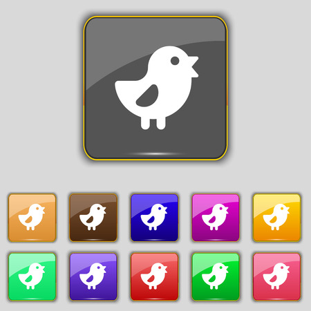 eleven: chicken, Bird icon sign. Set with eleven colored buttons for your site. Vector illustration