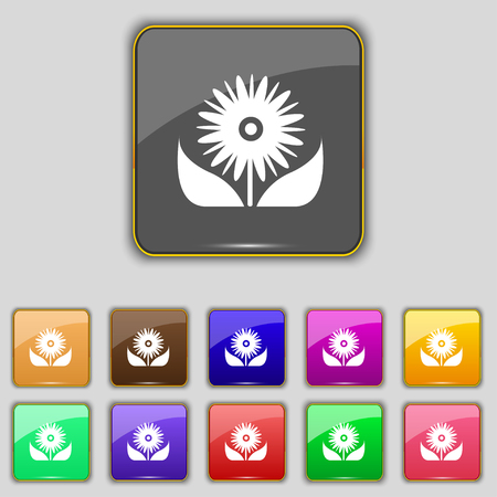 eleven: Bouquet of flowers with petals icon sign. Set with eleven colored buttons for your site. illustration Stock Photo