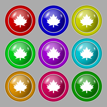 maple leaf icon: Maple leaf icon. Symbol on nine round colourful buttons. illustration