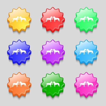 kampfhund: Wetten auf Hundek�mpfe Symbol Zeichen. Symbol auf neun wellig bunten Tasten. Vektor-Illustration