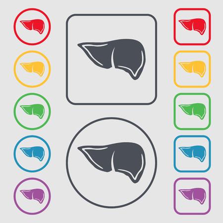 hepatic: Liver