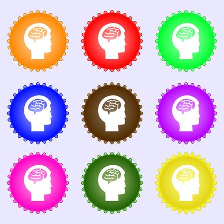 iq: Brain Illustration
