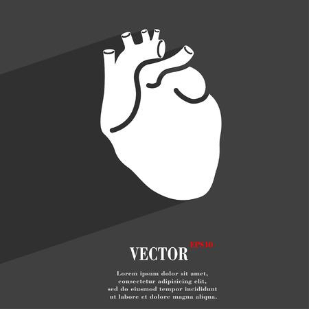 detail of heart muscle: Human heart
