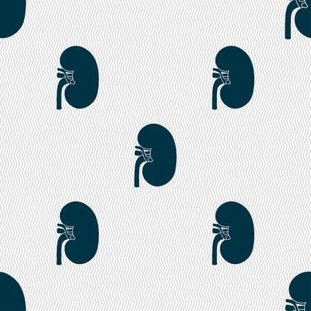 nephritis: Kidney Illustration