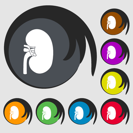 renal failure: Kidney sign icon. Symbols on eight colored buttons. illustration