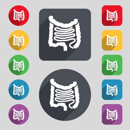 alimentary canal: Intestines icon sign. A set of 12 colored buttons and a long shadow. Flat design. illustration Stock Photo