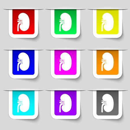 nephritis: Kidney icon sign. Set of multicolored modern labels for your design. illustration