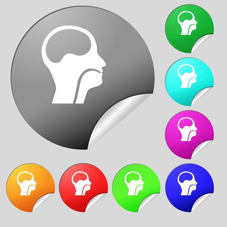 pleura: larynx, Medical Doctors Otolaryngology icon sign. Set of eight multi colored round buttons, stickers. illustration Stock Photo
