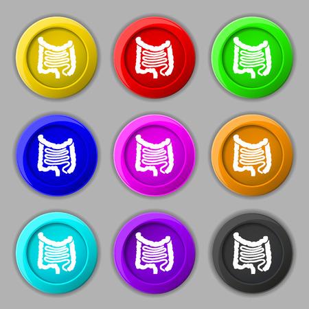 cecum: Intestines icon sign. symbol on nine round colourful buttons. illustration