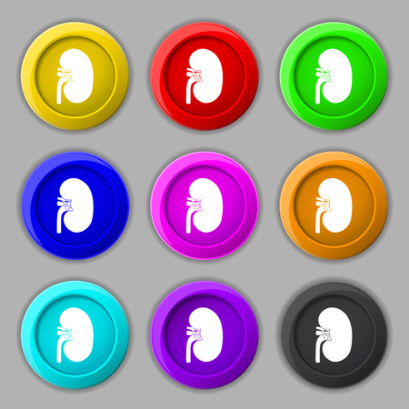 Kidney icon sign. symbol on nine round colourful buttons. illustration