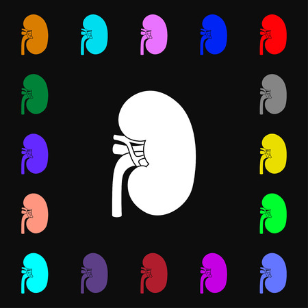 Kidney icon sign. Lots of colorful symbols for your design. illustration Stock Photo