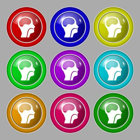 paranasal: larynx, Medical Doctors Otolaryngology icon sign. symbol on nine round colourful buttons. illustration