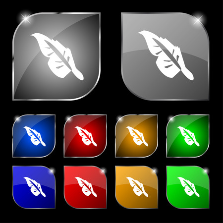 poet: Feather icon sign. Set of ten colorful buttons with glare. Vector illustration Illustration