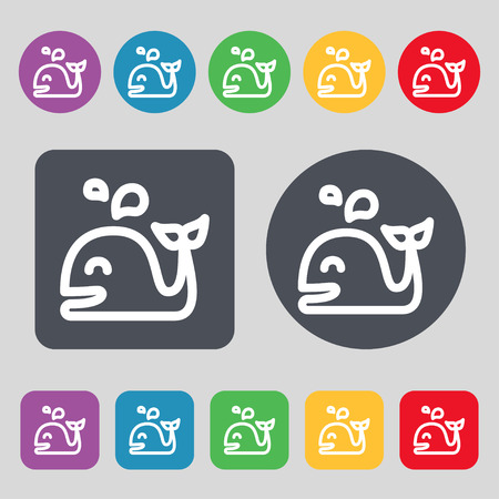 cetaceans: Whale icon sign. A set of 12 colored buttons. Flat design. Vector illustration