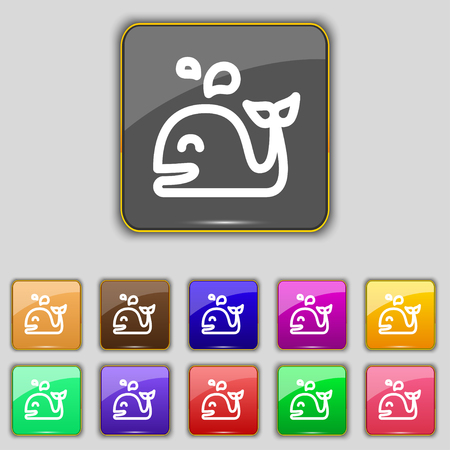 cetaceans: Whale icon sign. Set with eleven colored buttons for your site. Vector illustration