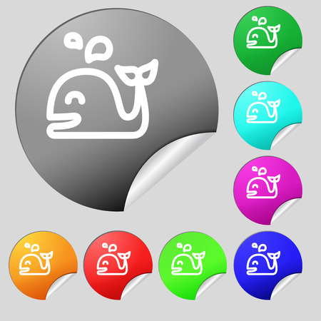 cetaceans: Whale icon sign. Set of eight multi colored round buttons, stickers. Vector illustration