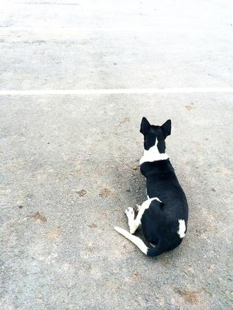 white dog: Lonely dog