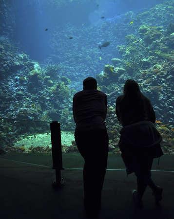 aqualung: sfondi aqua, autorespiratore, acquario,, bellezza, blu, fondo, bolla, colore, colorito, mondo subacqueo
