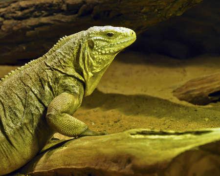 merciless: lizard Stock Photo