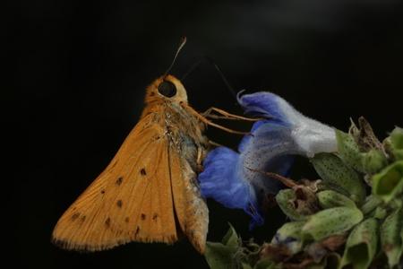 Butterfly on blue flower Stock fotó