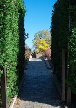Millenuim park alley