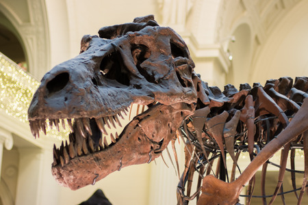 Dinosaur skeleton in a museum