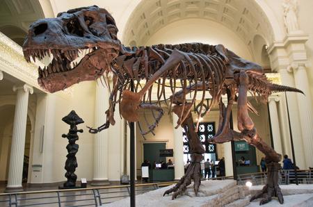 Dinosaur skeleton 에디토리얼