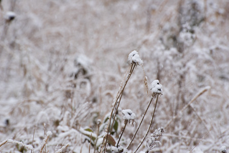 christmas grounds: Grass under a first snow Stock Photo