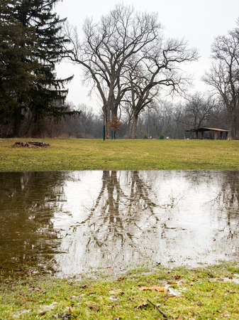Puddle in a park