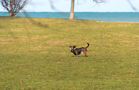 Dog playing in a park