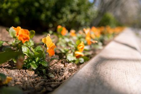 grass close up: Flowers Stock Photo