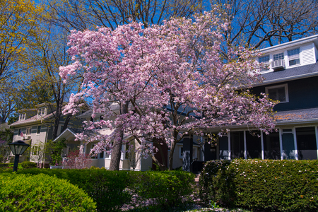 suburban neighborhood: Suburban house