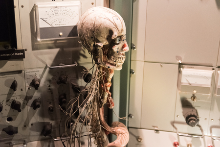 Human skeleton and nervous system in a medical office