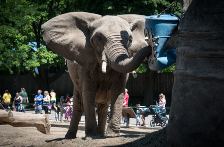 Big elephant in a county zoo