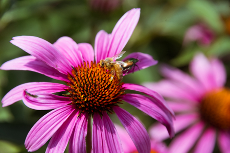 Small bee sitting on a purple flower Stock Photo