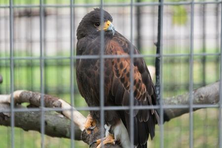 Big hawk sitting on a branch in a zoo